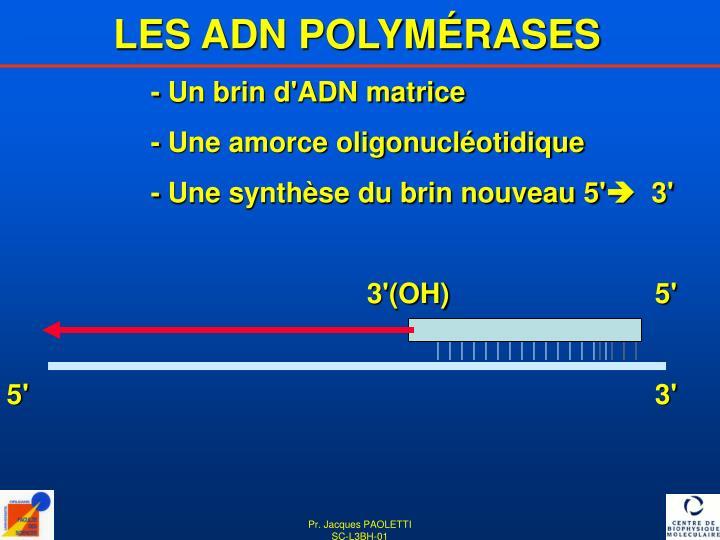 LES ADN POLYMÉRASES