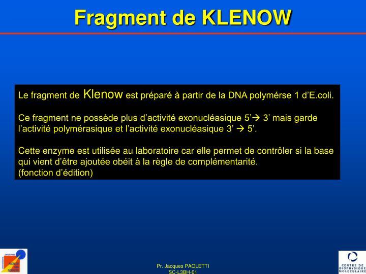 Fragment de KLENOW