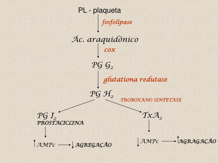 PL - plaqueta