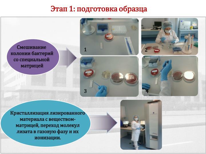 Этап 1: подготовка образца