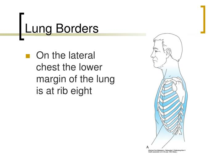Lung Borders