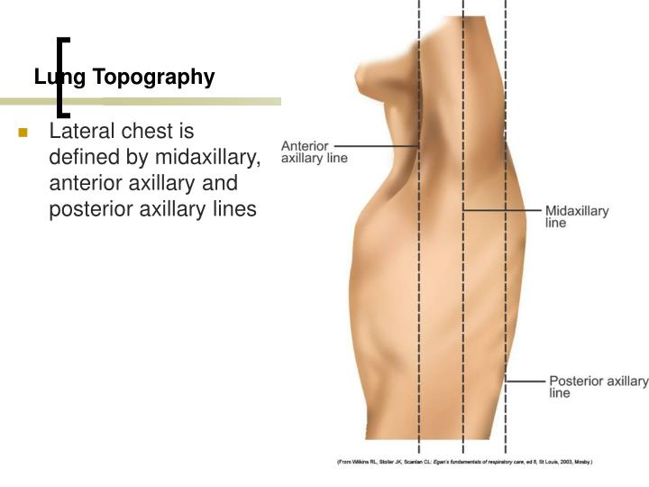 Lung Topography