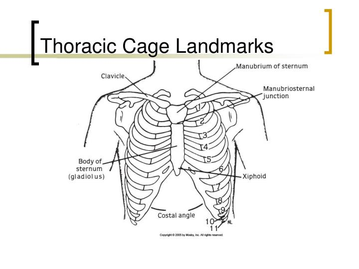 Thoracic Cage Landmarks