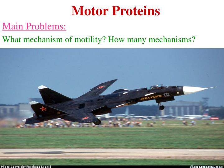 Motor Proteins
