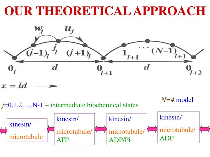 OUR THEORETICAL APPROACH