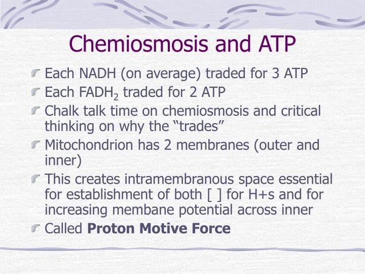 Chemiosmosis and ATP