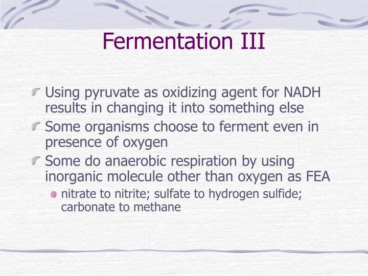 Fermentation III