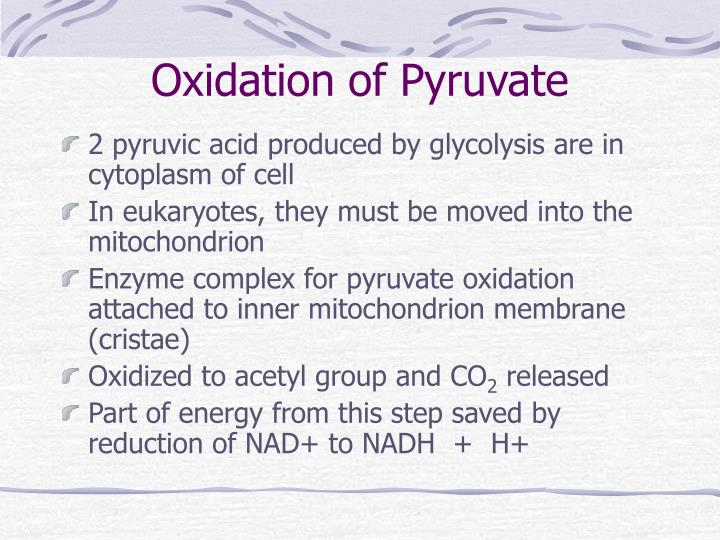 Oxidation of Pyruvate