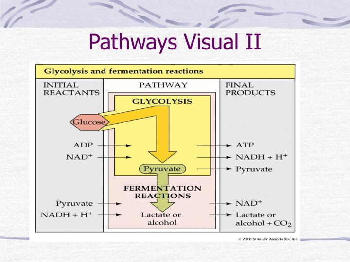 Pathways Visual II