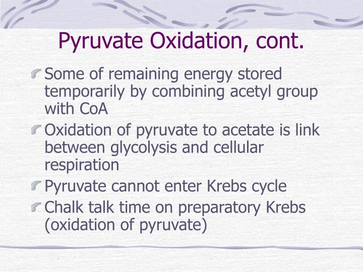 Pyruvate Oxidation, cont.