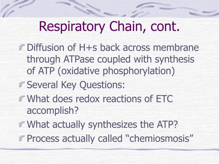 Respiratory Chain, cont.