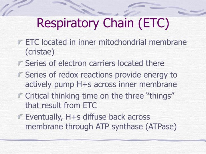 Respiratory Chain (ETC)