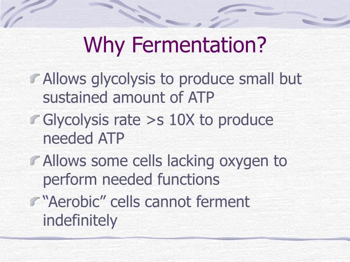 Why Fermentation?