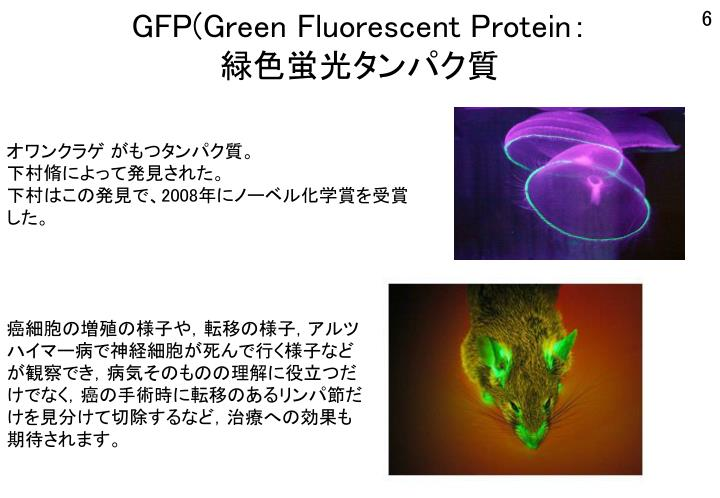 GFP(Green Fluorescent Protein
