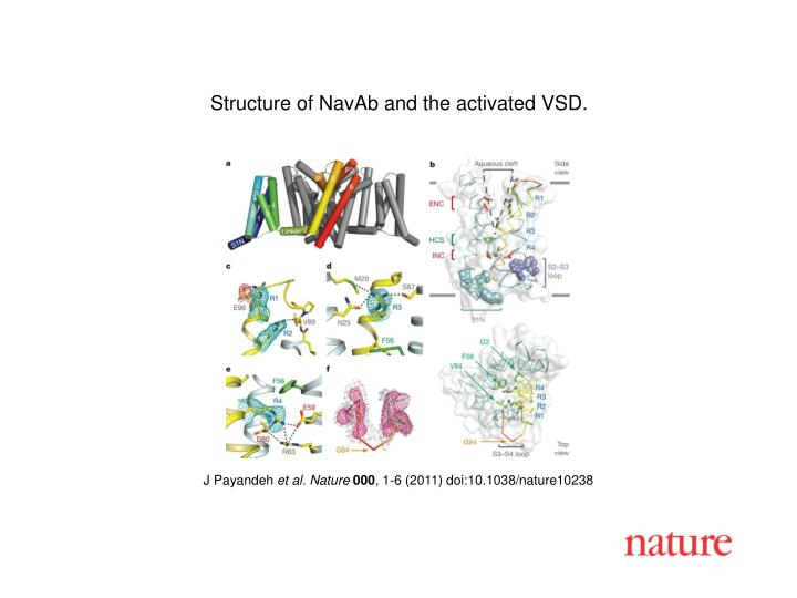 Structure of NavAb and the activated VSD.