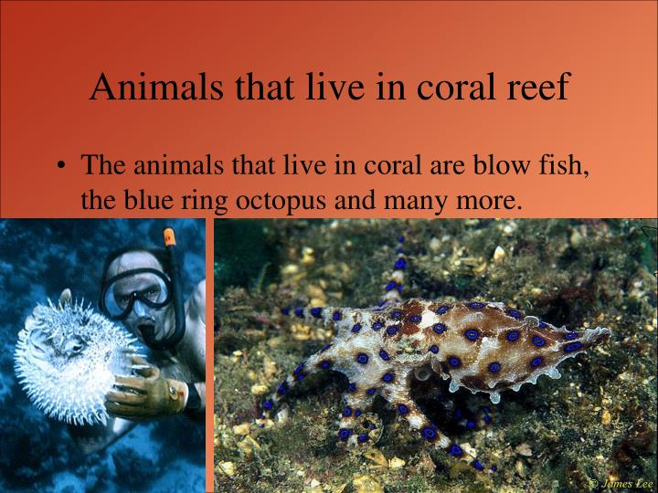 Animals that live in coral reef