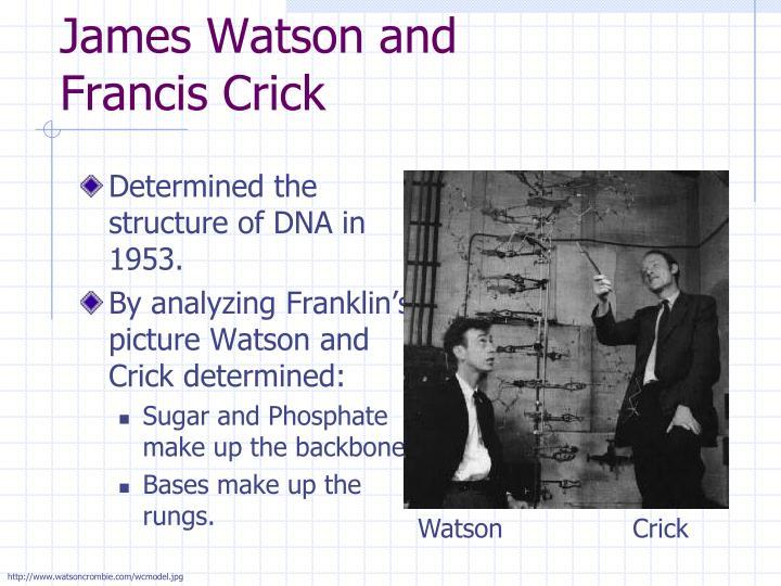 watson and crick essay