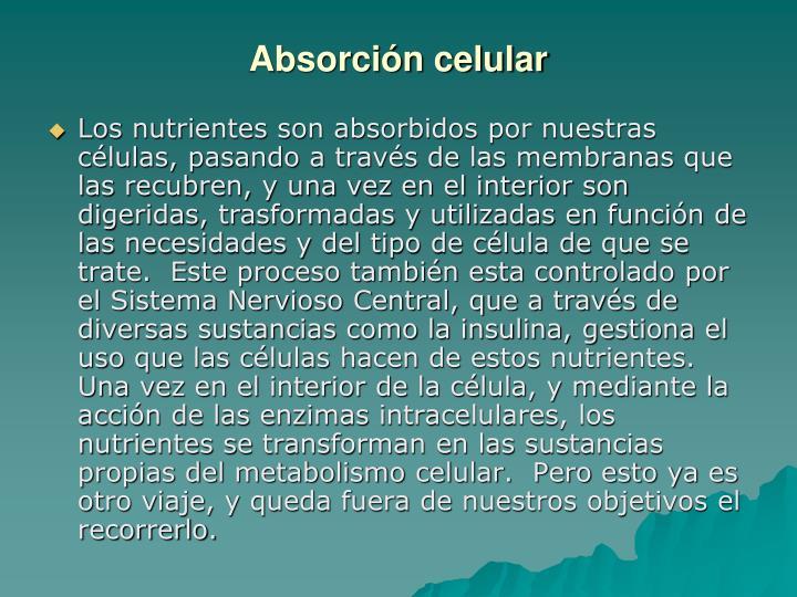 Absorción celular