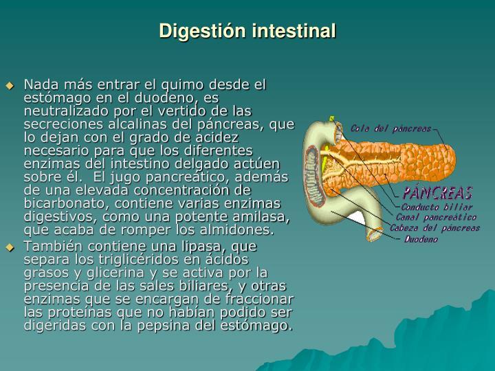 Digestión intestinal