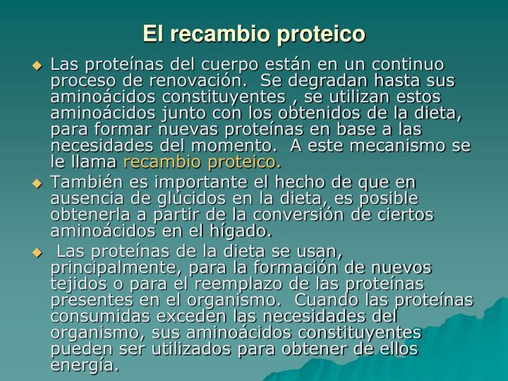 El recambio proteico