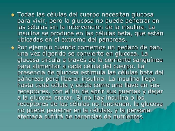 Todas las células del cuerpo necesitan glucosa para vivir, pero la glucosa no puede penetrar en las células sin la intervención de la insulina. La insulina se produce en las células beta, que están ubicadas en el extremo del páncreas.