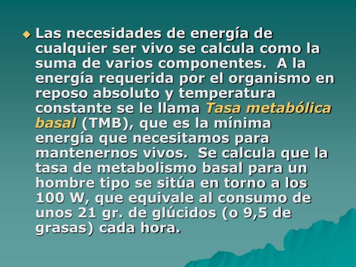 Las necesidades de energía de cualquier ser vivo se calcula como la suma de varios componentes.  A la energía requerida por el organismo en reposo absoluto y temperatura constante se le llama