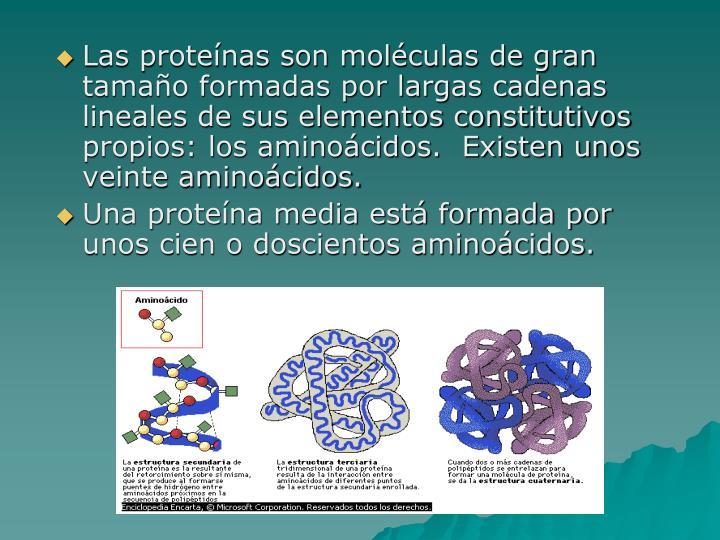 Las proteínas son moléculas de gran tamaño formadas por largas cadenas lineales de sus elementos constitutivos propios: los aminoácidos.  Existen unos veinte aminoácidos.