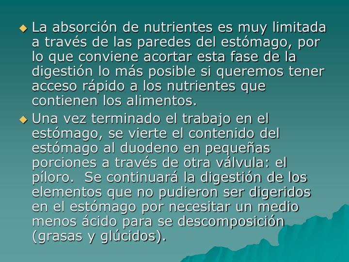 La absorción de nutrientes es muy limitada a través de las paredes del estómago, por lo que conviene acortar esta fase de la digestión lo más posible si queremos tener acceso rápido a los nutrientes que contienen los alimentos.