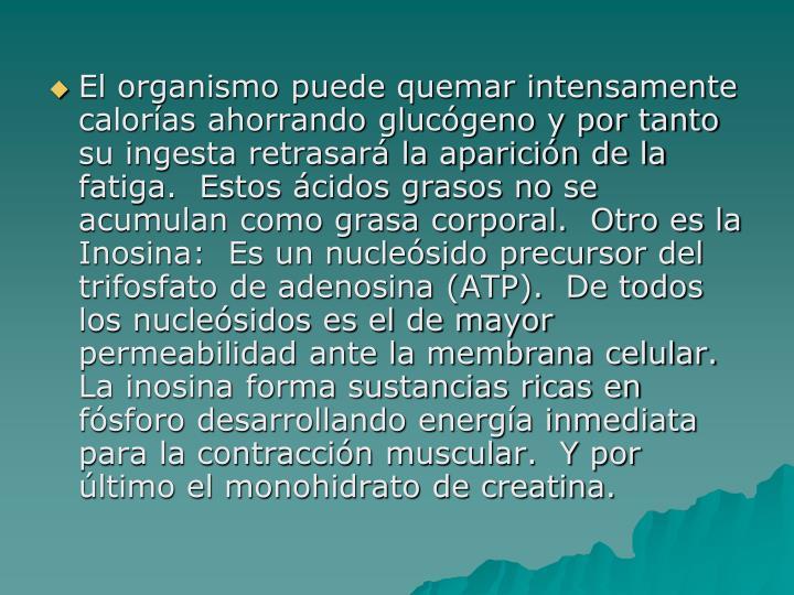 El organismo puede quemar intensamente calorías ahorrando glucógeno y por tanto su ingesta retrasará la aparición de la fatiga.  Estos ácidos grasos no se acumulan como grasa corporal.  Otro es la Inosina:  Es un nucleósido precursor del trifosfato de adenosina (ATP).  De todos los nucleósidos es el de mayor permeabilidad ante la membrana celular.  La inosina forma sustancias ricas en fósforo desarrollando energía inmediata para la contracción muscular.  Y por último el monohidrato de creatina.