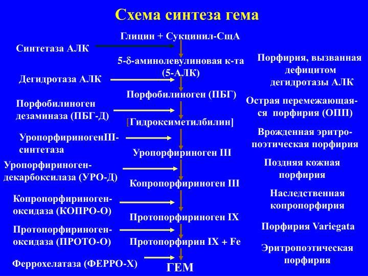 Схема синтеза гема