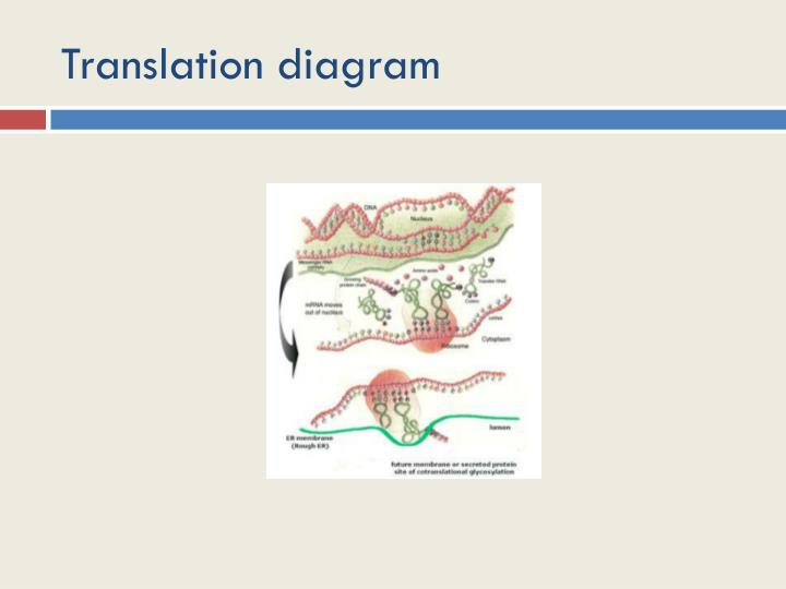 Translation diagram