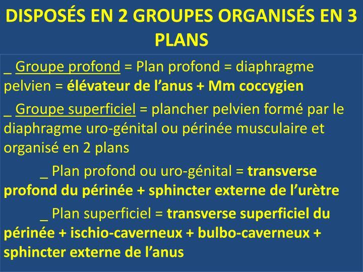 DISPOSÉS EN 2 GROUPES ORGANISÉS EN 3 PLANS