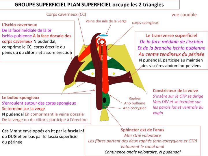 GROUPE SUPERFICIEL PLAN SUPERFICIEL occupe les 2 triangles