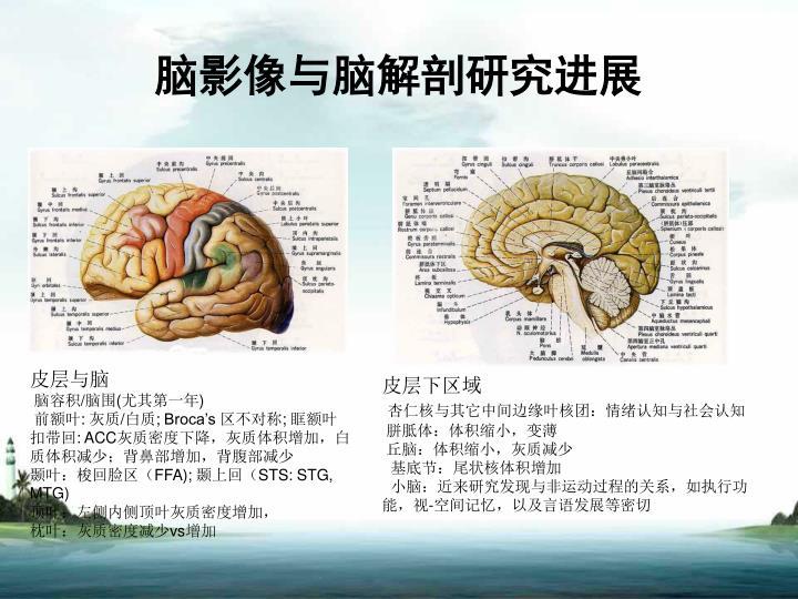 脑影像与脑解剖研究进展