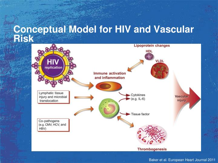 Conceptual Model for HIV and Vascular Risk