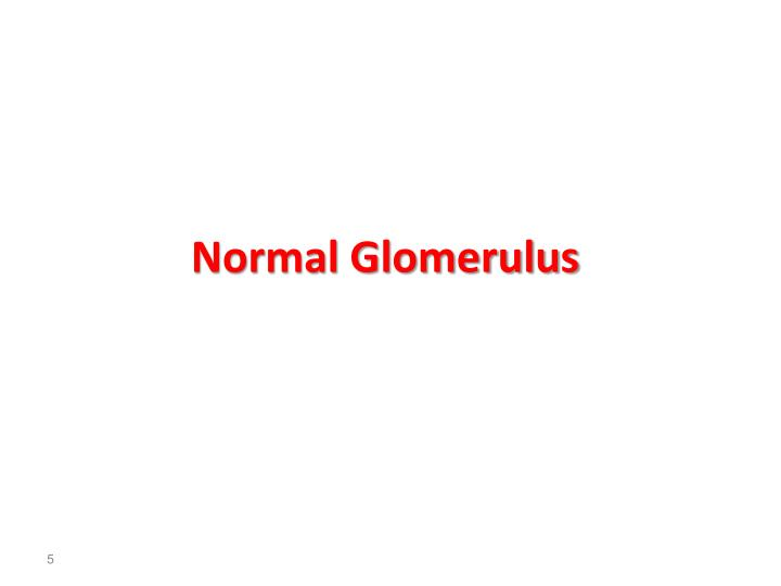 Normal Glomerulus