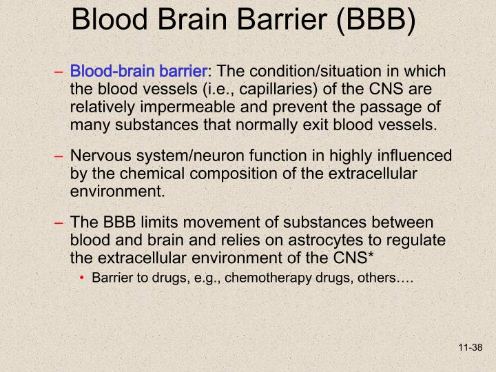 Blood Brain Barrier (BBB)