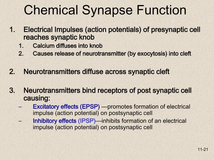Chemical Synapse Function