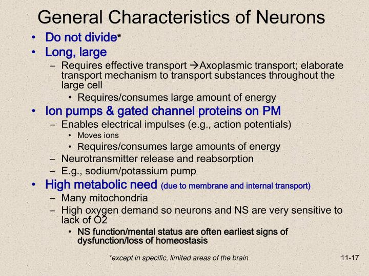 General Characteristics of Neurons