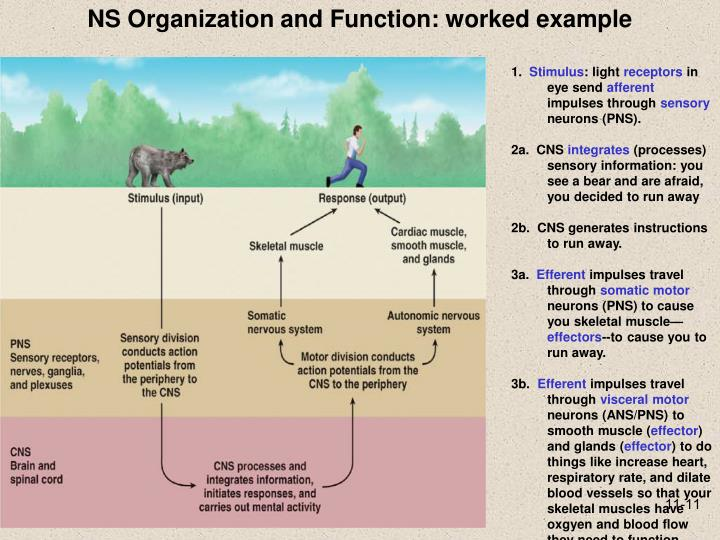 NS Organization and Function: worked example