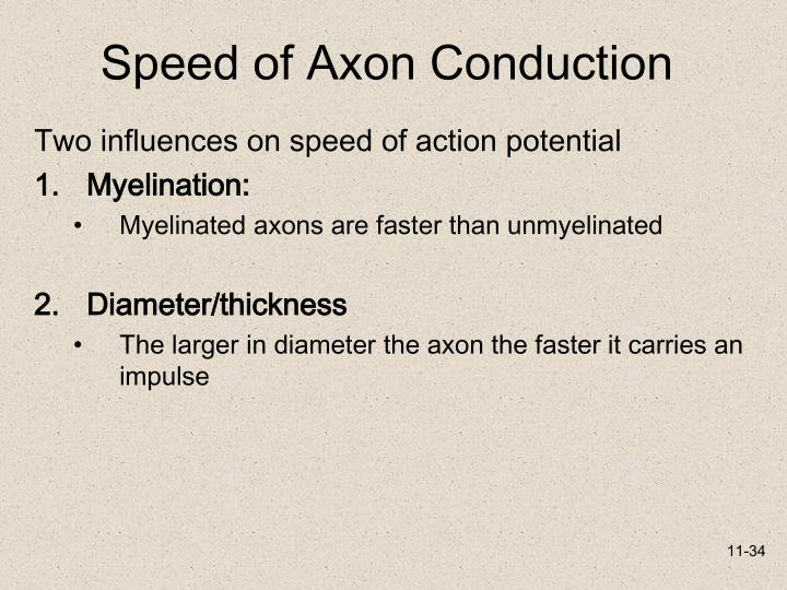 Speed of Axon Conduction
