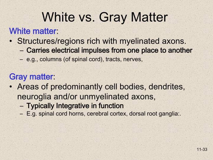 White vs. Gray Matter