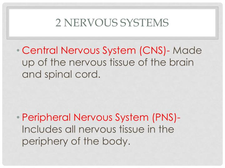 2 nervous systems