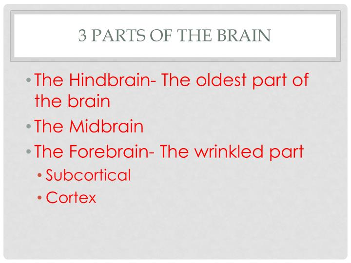 3 Parts of the Brain