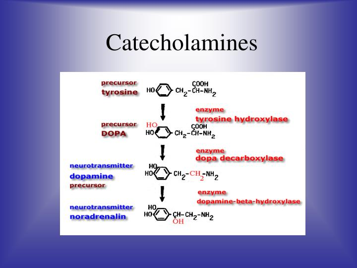 Catecholamines