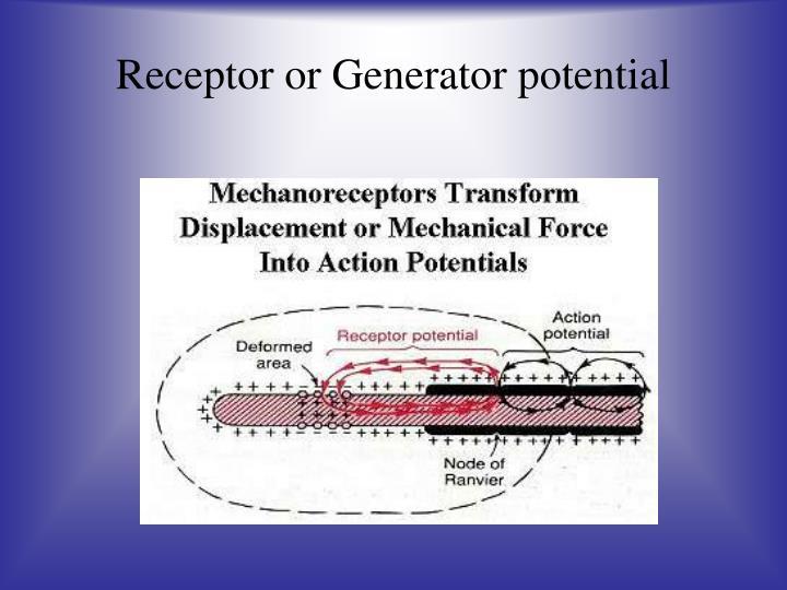 Receptor or Generator potential