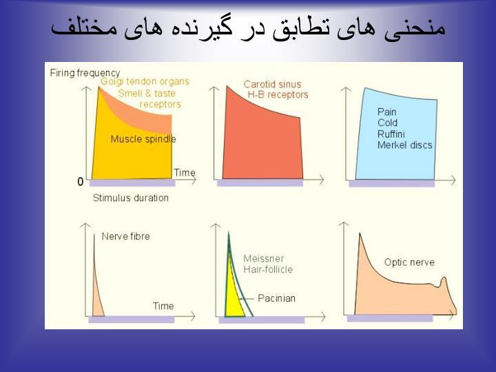 منحنی های تطابق در گیرنده های مختلف حسی