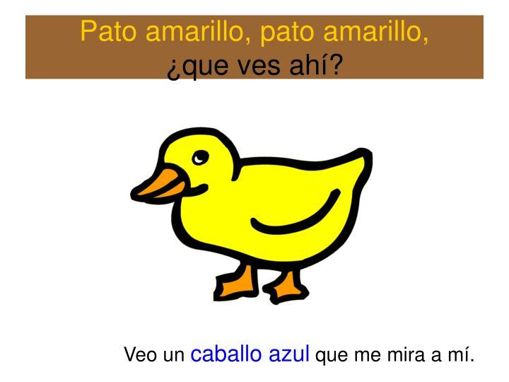 Pato amarillo, pato amarillo,