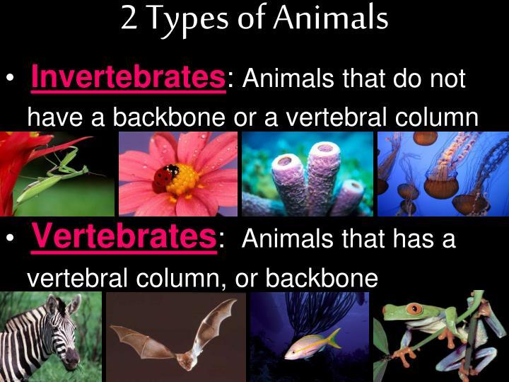2 Types of Animals