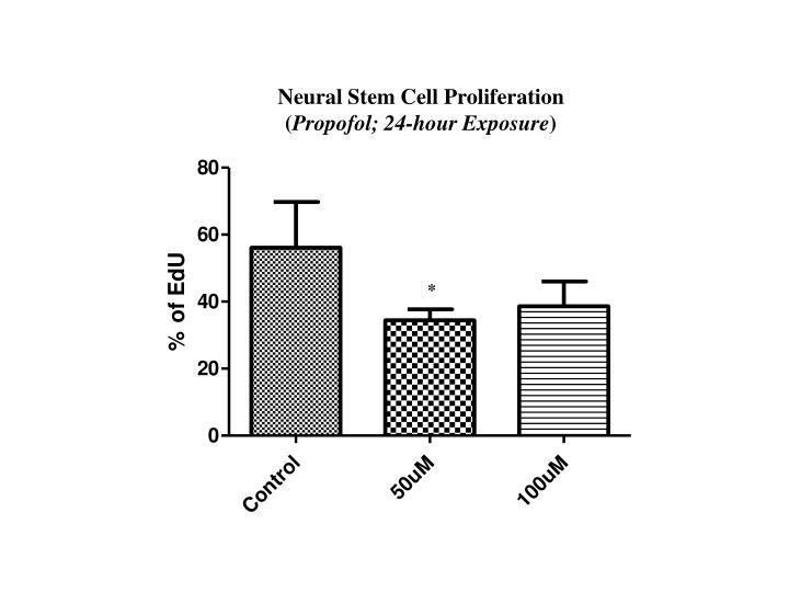 Neural Stem Cell Proliferation